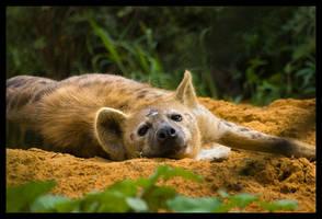 hyena 2 by chrizzz6