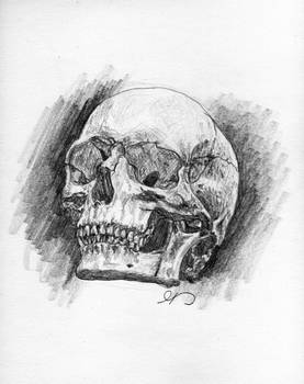 Skull Study 3/4 View by DragonOfTheDamned