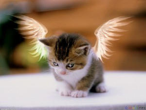 Angelic-Kitten-Art's Profile Picture