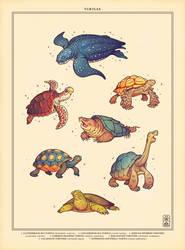 Turtle Week by einen