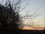 feb 9th sunset 4 by BlueIvyViolet