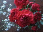 red carnations 4 by BlueIvyViolet