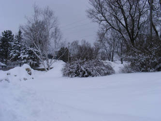 snow in my side yard by BlueIvyViolet