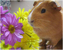 Guinea and flowers by die2night4love