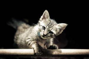 kitty by G1L4ng