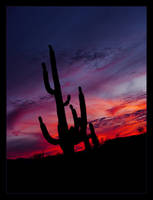 Saguaro Sunset by littleredelf