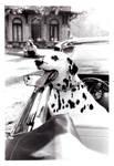 Dalmatian Dreams by littleredelf