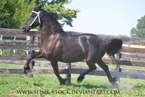 June 2016: Friesian Trot by slime-stock