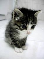 Cute Tobias by Ephell