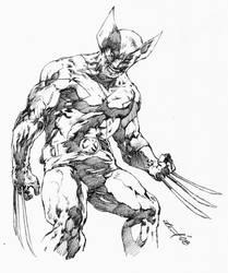 Wolverine:Sketch by dwinbotp
