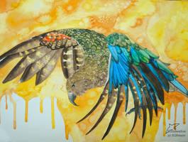 Wings of joy by Woodswallow