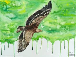 Soaring by Woodswallow