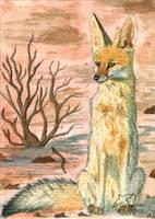 Cape Fox ACEO ComradeK by Woodswallow