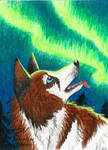 Dancing spirits (ACEO) by Woodswallow