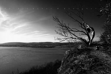 on a lonely tree... by Boas73