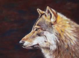 european grey wolf by Eline-portraits