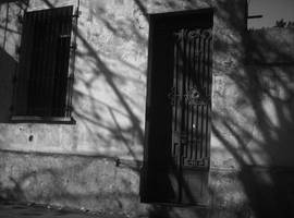 tree shadow by elultimodeseo
