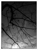 Winter Sky by elultimodeseo