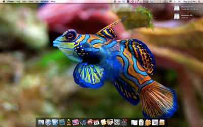 Desktop, 24 Apr 2008 by aliasdagain