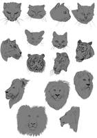 Cats Study by Zoph42