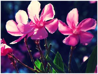 Floridian Flower by Silent-Lightning
