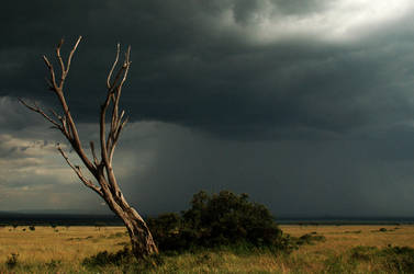 Anticipating the storm by CountDonoho