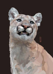 The Cougar from Minnesota by AliceTwice
