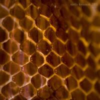 Hipermetropixel: Peel by uvita