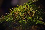 Nepenthe by uvita