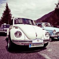 White beetle by KrisSimon