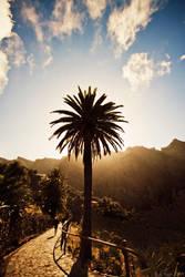 Palm Tree by KrisSimon