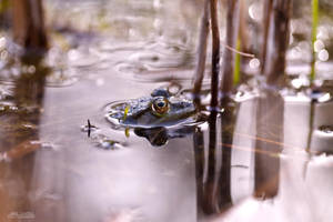 A frog's life by KrisSimon
