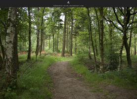 Forest Trail by stockkj