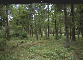 Huis ter Heide Forest by stockkj