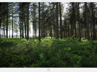 Kampina Forest by stockkj