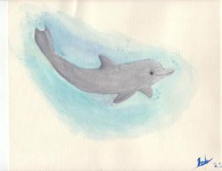 Bottlenose Dolphin by ninjagriff