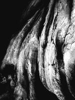 bonsai bark by redtrain66