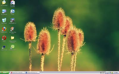 August '10 Desktop: Flowers by PaperJunk