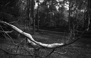Branch by Lucienel