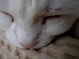 Sleeping cat by Helena666