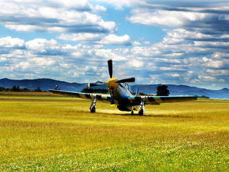 Mustang P-51 by Ronny-F