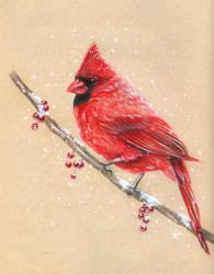 Cardinal by fearn
