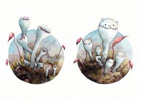 Cladonia by Alliot-art