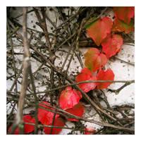 autumn feelings II by sth22art