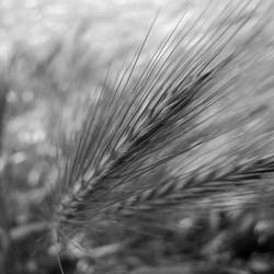 harvest by sth22art