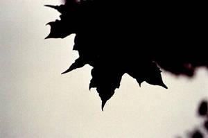Shadowplay by Alexandru1988