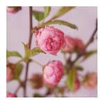 little pink flowers 2 by Julanna
