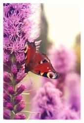 butterfly by Julanna