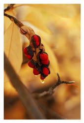 autumn by Julanna