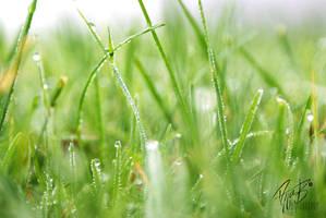 Foggy Grass by Silverholm